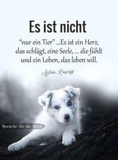 Hunde Gedichte Zitate Tiere Lebensweisheiten Spruche Nachdenkliche Spruche Spruche Natur Gluckliche