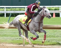 Koji Maeda's Lani (Tapit) breezed five furlongs in 1:02.09 (13/16) Wednesday morning at Belmont in preparation for the June 11 GI Belmont S.   Under exercise rider Eishu Maruucha, the quirky gray was clocked in splits …