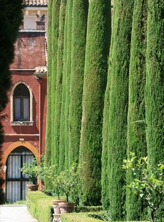 Cypresses in the Giusti Garden in Verona, Italy