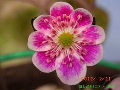 www.asahi-net.or.jp ~yq3m-kr 12k-2-21.jpg