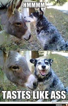 Lustige Hunde / bildmix.com - Täglich neue Picdumps!