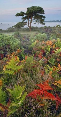 New Forest National Park, Hampshire, U.K