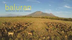 Baluran National Park, Africa van Java, Indonesia