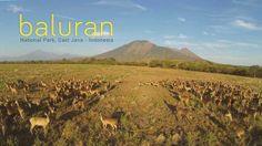 Baluran National Park, Africa van Java, Indonesia