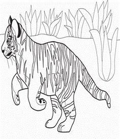 112 Gambar Lions And Tigers terbaik Lion Lions dan