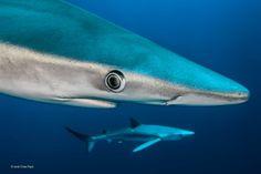 2014年度野生动物摄影:与水下巨兽擦身而过_高清图集_新浪网