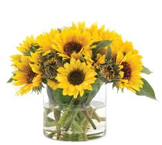 Natural Decorations, Inc. - PREORDER MID-FEB Sunflower | Yellow | Glass Cylinder