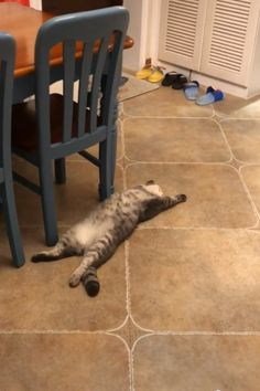 Si sente così rilassato e a suo agio 😺😂😂 - Katzen fotos Cute Funny Dogs, Cute Cat Gif, Cute Funny Animals, Cute Baby Animals, Animals And Pets, Cute Cats, Funny Cats, Funny Humor, Cute Animal Videos