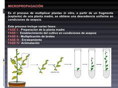 cultivos invitro de plantas