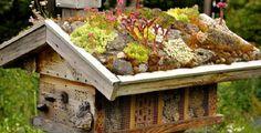 Ronny is telling you:'Sempervivum und Sedum auf dem Wildbienenhaus' Marigolds In Garden, Hydrangea Garden, Sempervivum, Roof Plants, Wild Bees, Bug Hotel, Bee House, Design Jardin, Garden Animals