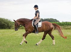 Positive Retraining - some really good points in this article, particularly hands and reins