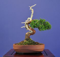 DSC_0017 by Bonsai eejit, via Flickr