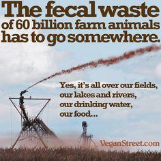 The fecal waste of 60 billion farm animals has to go somewhere.