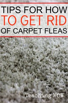 Tips For How To Get Rid Of Carpet Fleas...  Because for how to tips - Click on the following link!  http://www.teachinghow.com/how-to-get-rid-of-carpet-fleas/