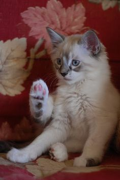 See my paw?