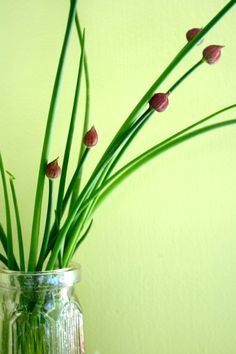 Chives. So darn pretty. by Janine Morrison