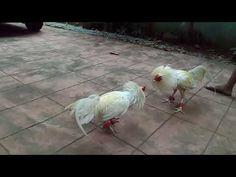 bitaw Tagalog, Youtube, Animals, Animaux, Animal, Animales, Youtubers, Youtube Movies, Animais