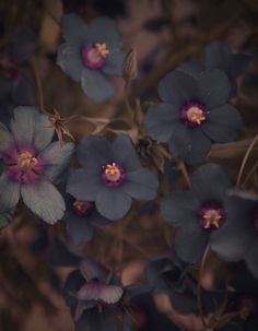 black flowers. Gorgeous.