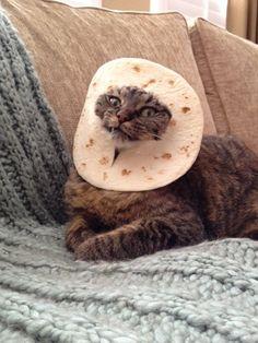 Breading The Cat