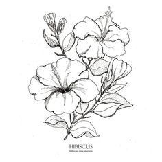 Hibiscus Print Botanical Illustration Wall Art Pen And Ink Floral