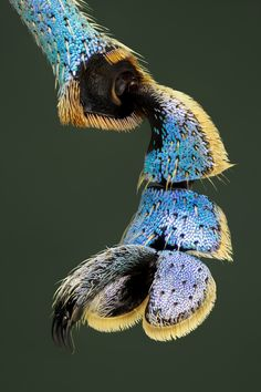 Extreme macro of a claw of Eupholus magnificus (Curculionidae collection specimen Papua exact date Weird Creatures, Sea Creatures, Micro Photography, Scenic Photography, Aerial Photography, Night Photography, Landscape Photography, Foto Macro, Microscopic Photography