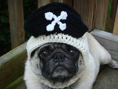 Mützen für Hunde hundebekleidung piraten