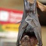 10 Frases com Morcego Em Inglês | EnglishOk http://www.englishok.com.br/10-frases-com-morcego-em-ingles/