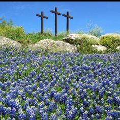 Texas Blue Bonnets from the Hill Country in Texas With Three Crosses Champs, Only In Texas, Old Rugged Cross, Religion, Into The West, Texas Bluebonnets, Loving Texas, Texas Pride, Texas Hill Country
