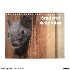 Over gratis billeder for Egern og Dyr - Pixabay Free Pictures, Free Images, Young Animal, Derbyshire, Rodents, White Elephant Gifts, Cubs, Squirrel, Art For Kids