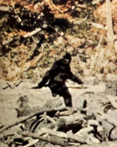 Bigfoot, Sasquatch, hoax-- whatever you call it, it has been sighted across the US. One recent sighting was even near Pikes Peak in Colorado Springs. Physical evidence of the creature is difficult to come by, which is perhaps explained by the American Indian belief (held by many tribes) that it is a spiritual creature, able to enter our realm at will and only visible to some people. Hikers beware, if you hear a stick hitting a hollow log, you're in Bigfoot territory.
