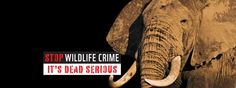This pledge has received 4 pledges. If people become more aware andeducated about the poaching that is taking place globally, it will change their outlo...