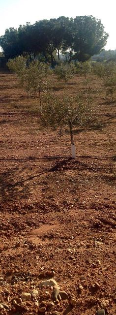 Mejor si protegemos el árbol en su base