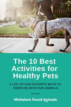 Trying to stay active with your pup? Here are a few of our favorite ways to exercise with our animals. Dog Health Tips, Dog Health Care, Dog Quotes Love, Dog Language, Healthy Pets, I Love Dogs, Dog Mom, Stay Active, Pet Care