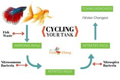Every new aquarium needs to be cycled before it can sustain live fish. But what does cycling a fish tank mean? Carp Fishing Tips, Carp Fishing Bait, Fishing Guide, Fishing Lakes, Fishing Rod, Fishing Basics, Fishing Videos, Trout Fishing, Fishing Boats