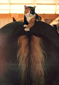 horseback riding. . . . with a kitty!