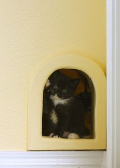 Little Door Leads To A Closet Under The Stairs Litter Box And Cat Food Is Hidden Behind Wall Great Way Keep Bo