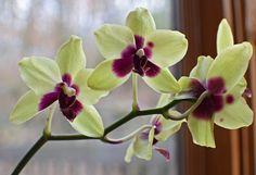 Hogyan neveljünk orchideát cserépben? - Bidista.com - A TippLista! Green Cleaning, Simple House, Make It Simple, Orchids, Tropical, Plants, Diy, Yellow, Container Gardening
