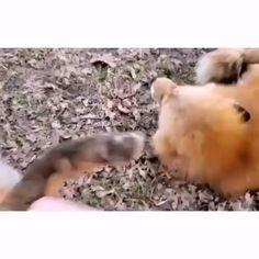 Cute Wild Animals, Cute Little Animals, Happy Animals, Cute Funny Animals, Animals Beautiful, Animals And Pets, Cute Dogs, Funny Animal Jokes, Funny Animal Videos