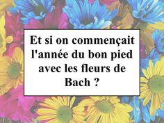Et si on commençait l'année du bon pied avec les fleurs de Bach ?
