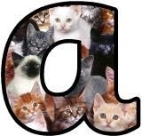 Free printable kittens background instant display lettering sets for classroom bulletin board display.