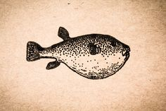 Big Belly Fish 2 x 2 Stamp