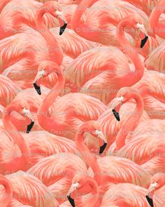 Removable Flamingo Wallpaper