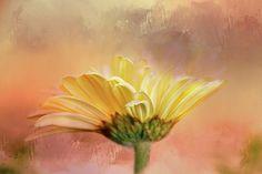 Arising In Beauty Digital Art by Terry Davis