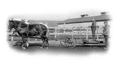Draft Horses Working