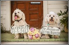 Our Humans are Getting Married! Love this 'dog lovers' Save the Date photo idea!