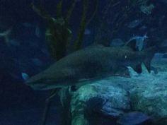 Ocean Park, Shark, Aquarium, Pets, Animals, Fish Stand, Animals And Pets, Animales, Animaux