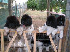 OK now..... everyone ahhhhhh <3 too cute!