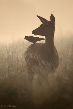 The Doe and the Jackdaw