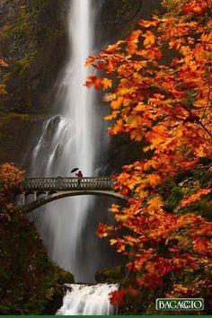As Cataratas Multnomah ficam em Oregon, EUA, e são as mais altas quedas de água do estado. Suas quedas caem em duas grandes etapas: a superior, com 165 m, e  menor, com 21 metros. Estar diante dela é uma sensação indescritível e renovadora.