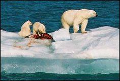 8 voyages sur des navires Hurtigruten - news Arctique et Antarctique